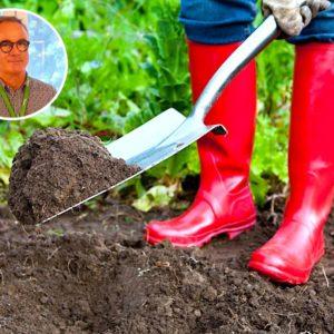 Come trattare l'orto e il giardino nella stagione pre-estiva